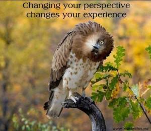 owlperspective